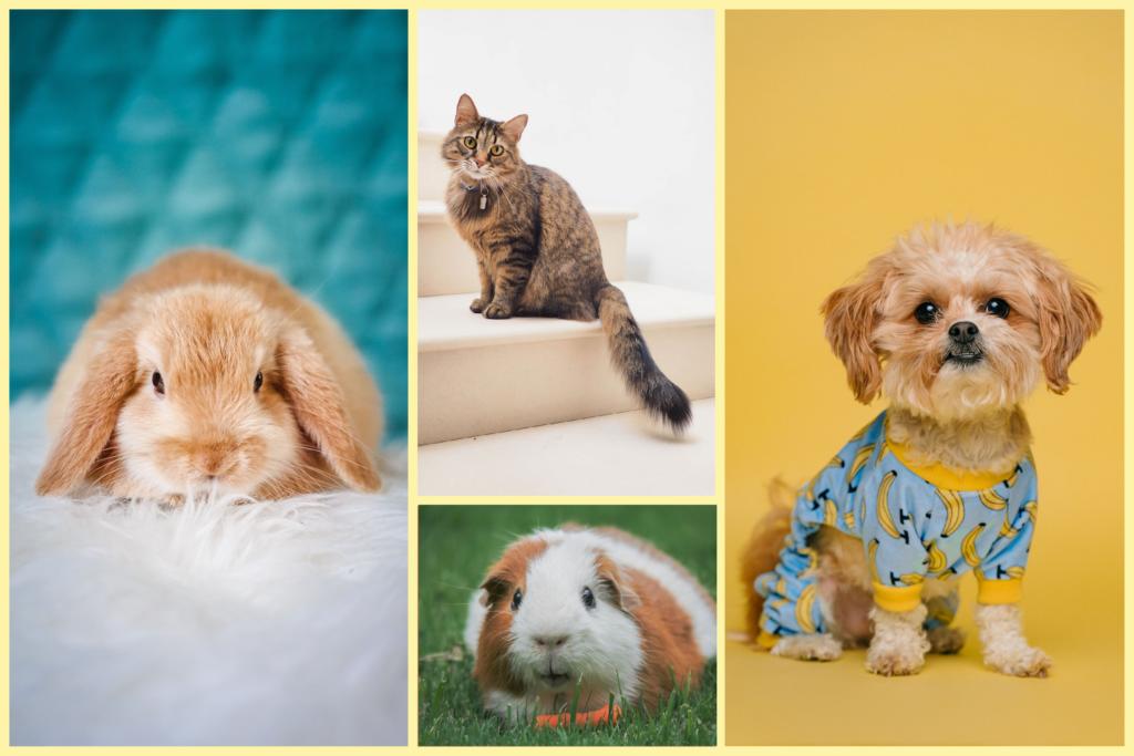 En kanin, katt, marsvin, hund.