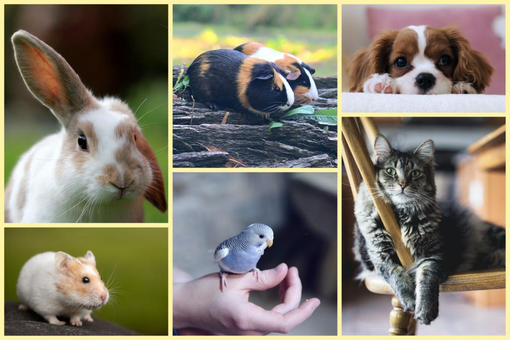 En kanin, hamster, marsvin, hund, fågel och katt.