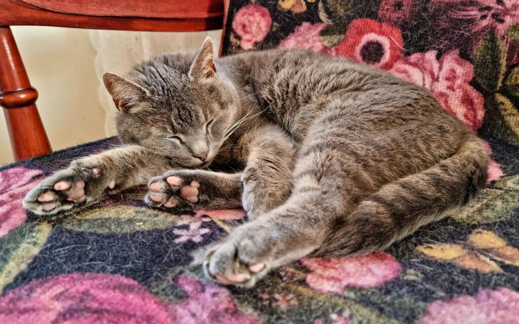 Katt som ligger och sover i en fåtölj.