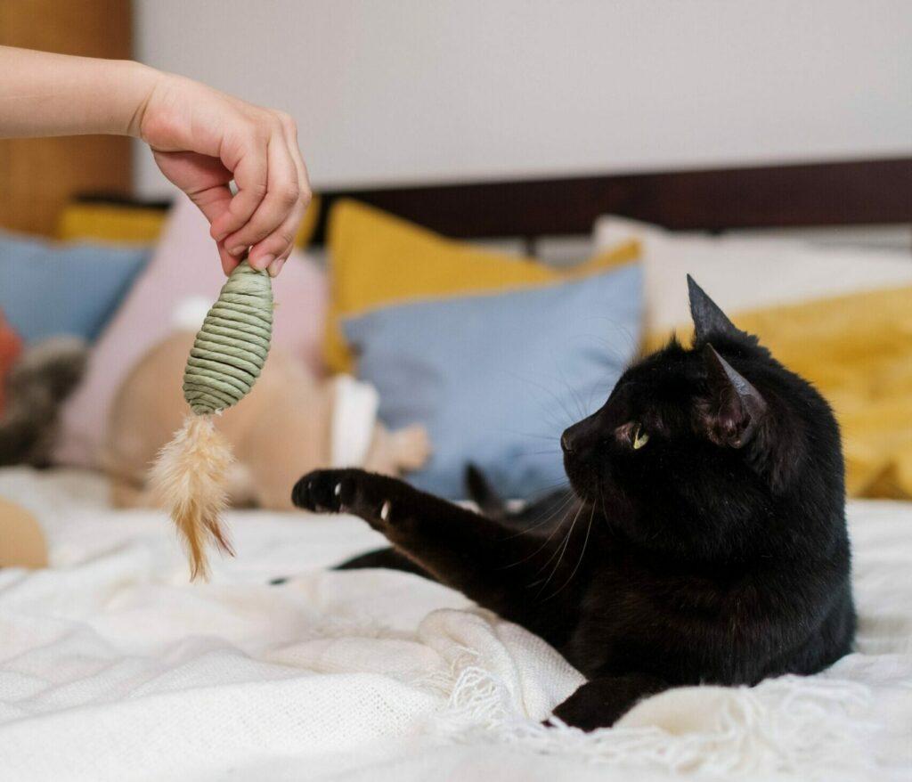 En svart katt som leker med en leksak i en säng.