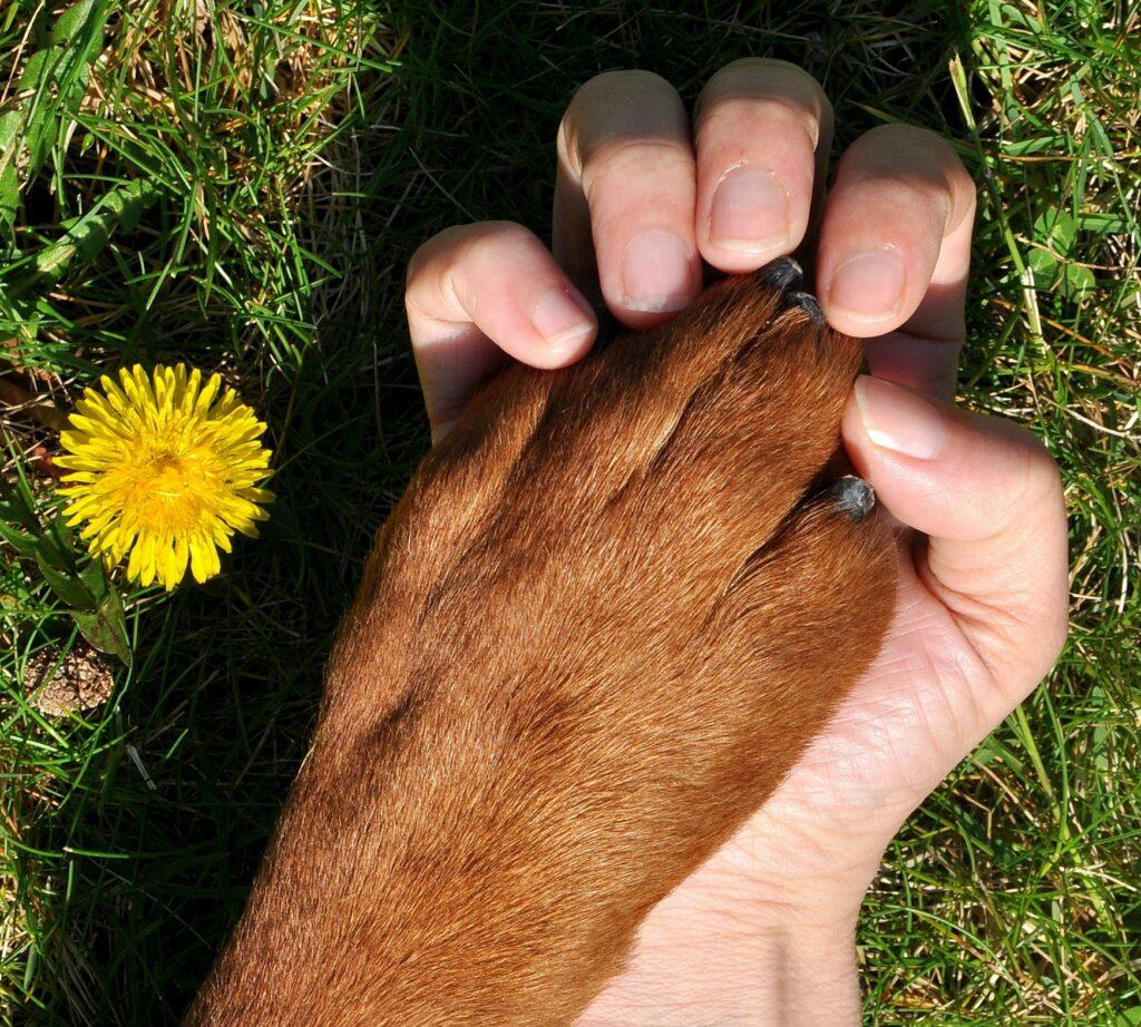 Hund tass och människohand som håller hand.